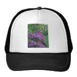 Fragrant purple flowers in the garden trucker hats