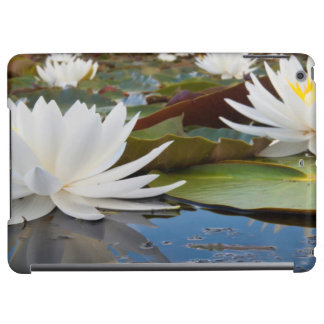 Fragrant Water Lily (Nymphaea Odorata) On Caddo Cover For iPad Air