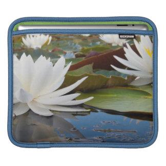 Fragrant Water Lily (Nymphaea Odorata) On Caddo iPad Sleeves