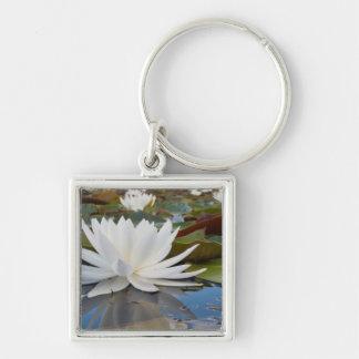 Fragrant Water Lily (Nymphaea Odorata) On Caddo Keychain
