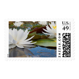 Fragrant Water Lily (Nymphaea Odorata) On Caddo Postage