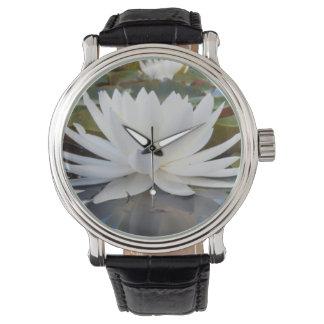 Fragrant Water Lily (Nymphaea Odorata) On Caddo Watch