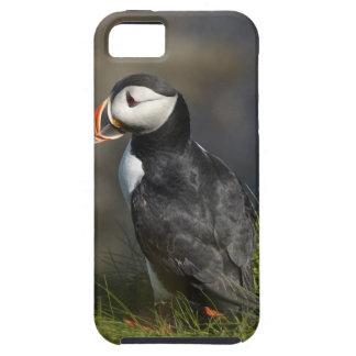 Frailecillo (arctica) del Fratercula, Staffa, de l iPhone 5 Case-Mate Coberturas
