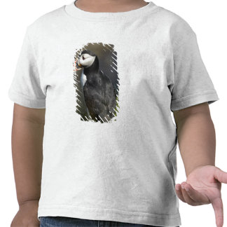 Frailecillo (arctica) del Fratercula, Staffa, de Camiseta
