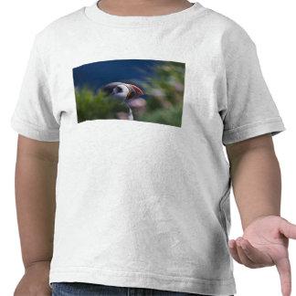 Frailecillo atlántico (arctica del Fratercula) Camiseta