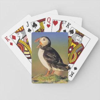 Frailecillo atlántico (Fratercula Arctica) Cartas De Póquer