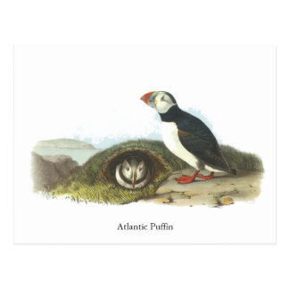 Frailecillo atlántico, Juan Audubon Postal