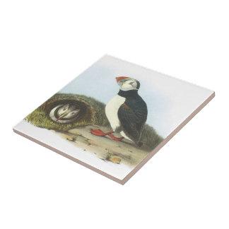 Frailecillo atlántico por Audubon Azulejo Cuadrado Pequeño
