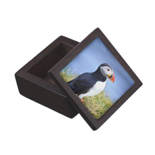 Frailecillo lindo caja de recuerdo de calidad