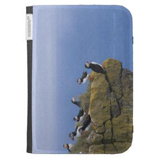Frailecillos atlánticos (arctica del Fratercula) e