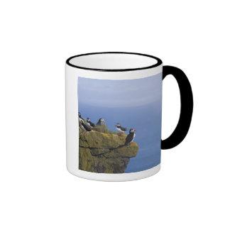 Frailecillos atlánticos (arctica del Fratercula) e Taza De Café