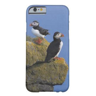 Frailecillos atlánticos (arctica del Fratercula) Funda De iPhone 6 Barely There