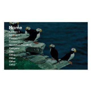 Frailecillos de cuernos en la isla del frailecillo plantilla de tarjeta de negocio