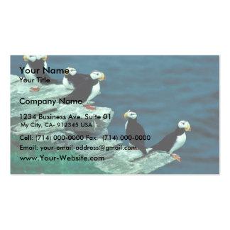 Frailecillos de cuernos en la isla del frailecillo plantillas de tarjetas de visita