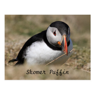 Frailecillos de la isla de Skomer Postal