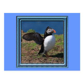 Frailecillos de la isla de Skomer Tarjetas Postales