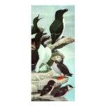 Frailecillos de los pájaros acuáticos del vintage, tarjeta publicitaria a todo color