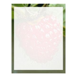 Frambuesa hawaiana (hawaiiensis del Rubus) Membrete Personalizado
