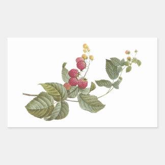 frambuesa (SP del Rubus.) por Redouté Pegatina Rectangular