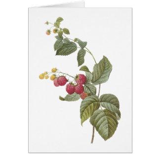 frambuesa (SP del Rubus.) por Redouté Tarjeta De Felicitación