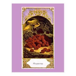 Frambuesas - anuncio 1874 del vintage tarjeta postal