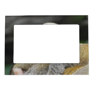 frame magnetic frame - Customized
