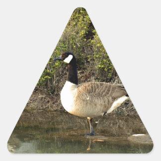 Framed Canadian Goose Triangle Sticker