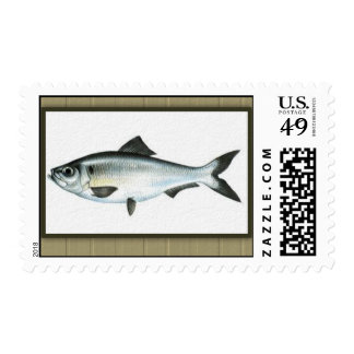 Framed Fish Image 3 Father's Day Postage