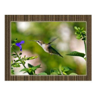 Framed Hummingbird Post Card