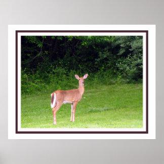 Framed Oil Painting White Tail Deer Poster