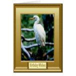 Framed white bird greeting cards