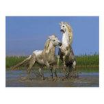 France, Bouches du Rhone, Natural Regional Park Postcard