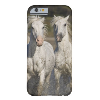 France, Camargue. Horses run through the 2 Barely There iPhone 6 Case