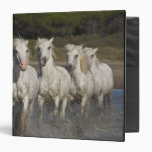 France, Camargue. Horses run through the 2 Vinyl Binder
