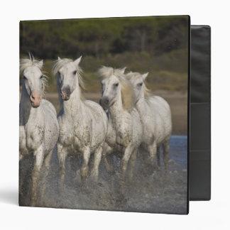 France, Camargue. Horses run through the 2 3 Ring Binders