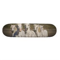 France, Camargue. Horses run through the 2 Skateboard