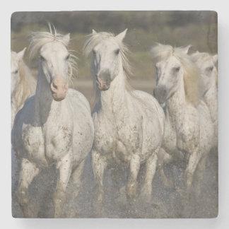 France, Camargue. Horses run through the 2 Stone Coaster