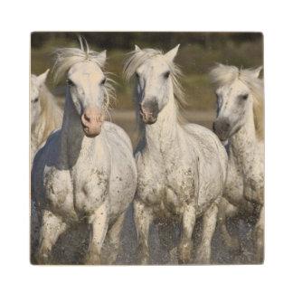 France, Camargue. Horses run through the 2 Wooden Coaster