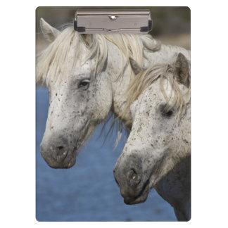 France, Camargue. Horses run through the Clipboard