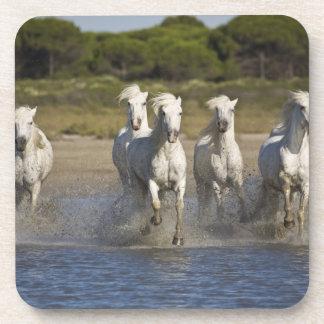 France, Camargue. Horses run through the estuary 2 Beverage Coaster