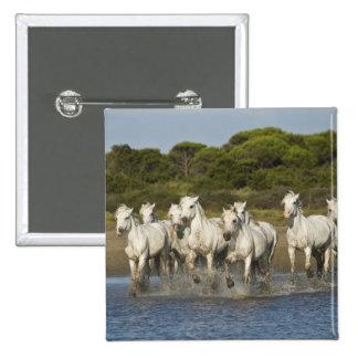 France, Camargue. Horses run through the estuary 3 Button