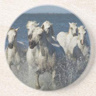 France, Camargue. Horses run through the estuary 4 Coaster