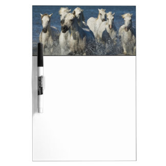 France, Camargue. Horses run through the estuary 4 Dry Erase Whiteboards
