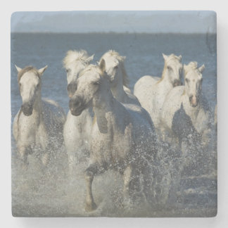 France, Camargue. Horses run through the estuary 4 Stone Coaster