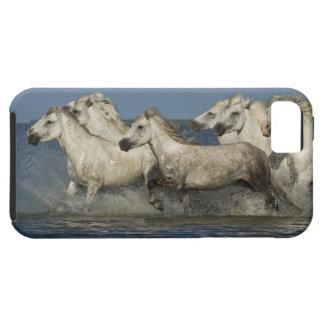 France, Camargue. Horses run through the estuary iPhone 5 Case