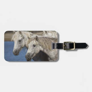 France, Camargue. Horses run through the Tag For Luggage
