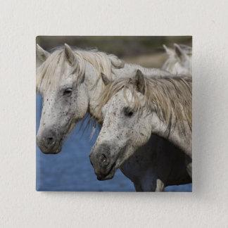 France, Camargue. Horses run through the Pinback Button