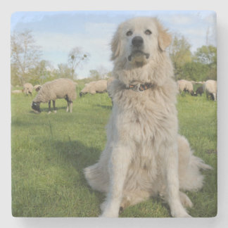 France, Centre, Chatillon-sur-Loire. Dog Stone Coaster