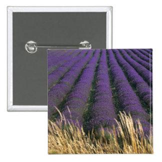 France, PACA, Alpes de Haute Provence, 2 2 Inch Square Button