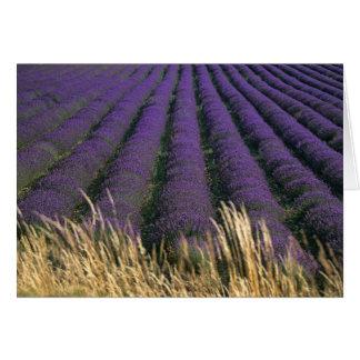 France, PACA, Alpes de Haute Provence, 2 Card